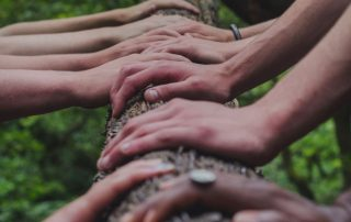 Alternating hands resting on a log from a diverse collection of people